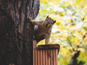 Epäzenit oravat