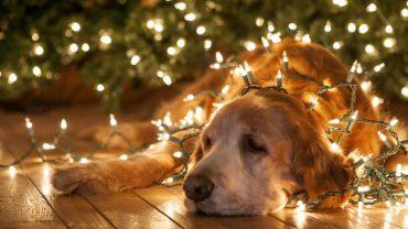 Täydellistä joulua!